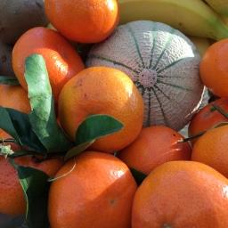 Vitamins – Always a Good Thing?
